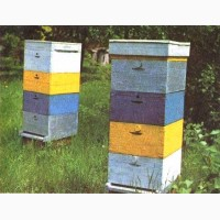 Куплю бджоли з корпусними вуликами
