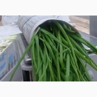 Продам лук зелёный доставляем по всей Украине