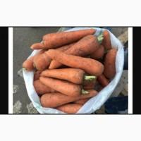 Продам морковь сорт Абако свежий