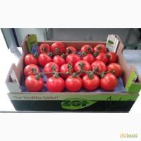 Продаем томаты, помидоры, чери из Испании