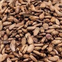 Куплю семена расторопши на масло