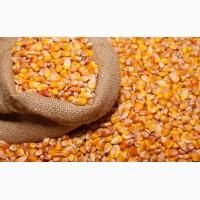 Купим кукурузу в Черниговской области. Форма оплаты любая