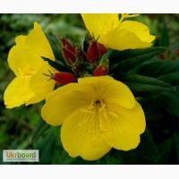 Квіти для Вашого саду 2