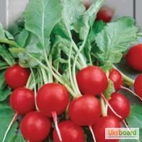 Продам семена редиски, доставка почтой по Украине.