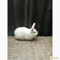 Продам кролика НЗБ 4мес