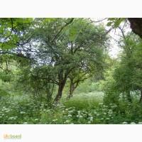 Продається земельна ділянка в урочищі Клепарів