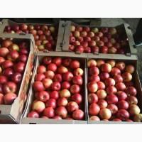 Продам яблоки оптом (Айдаред, Чемпион, Голден, Фуджи, Пинова)