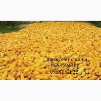 Семена кукурузы Маис, Монсанто, Вниис