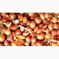 Продам лук севок по всей Украине доставка
