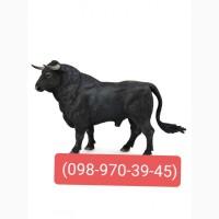Закупівля худоби в межах Вінницької області)