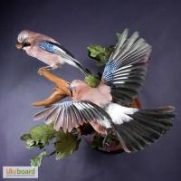 Изготовление и продажа чучел птиц