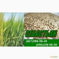 Семена гречихи, гороху, овса, ячменя, пшеницы