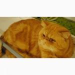 Кот для вязки Экзот- экстремал