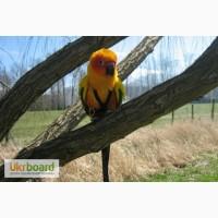 Шлейки для птахів різного розміру, шлейка для папуг