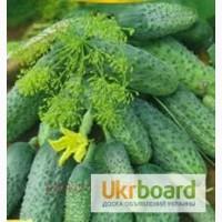 Органическая зелень овощи (продам)