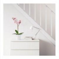 Орхидея сиреневaя Fejka Фeйка от Икеа