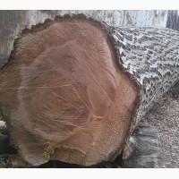 Продам горіх дерево (кругляк)