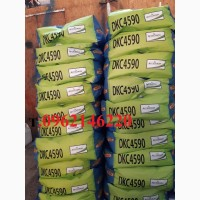 Кукуруза ДКС 4590 (DKC 4590)