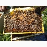 Реализуем пчелопакеты