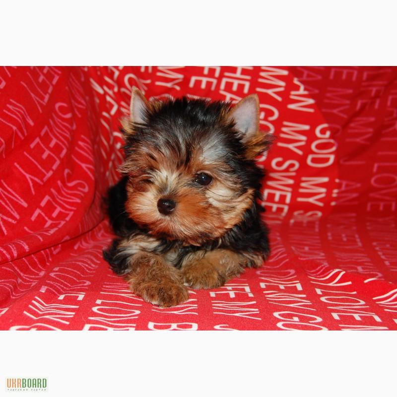 Брачное агентство для собак вязка собак поиск сук и