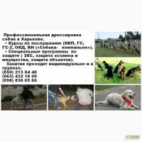 Профессиональная дрессировка собак (занятия по послушанию и защите)