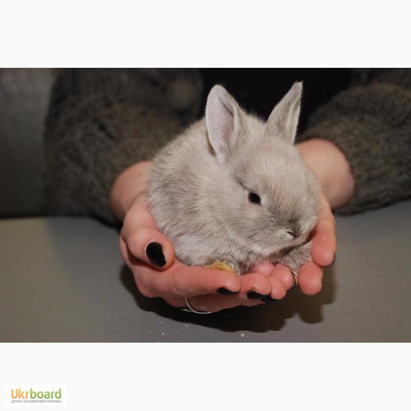Фото 3. Распродажа крольчат, распродажа бельчат
