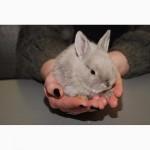 Распродажа крольчат, распродажа бельчат