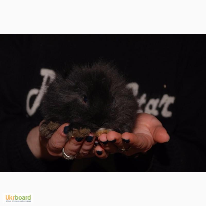 Фото 4. Распродажа крольчат, распродажа бельчат