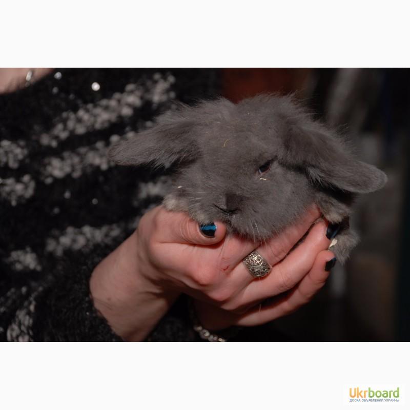 Фото 5. Распродажа крольчат, распродажа бельчат