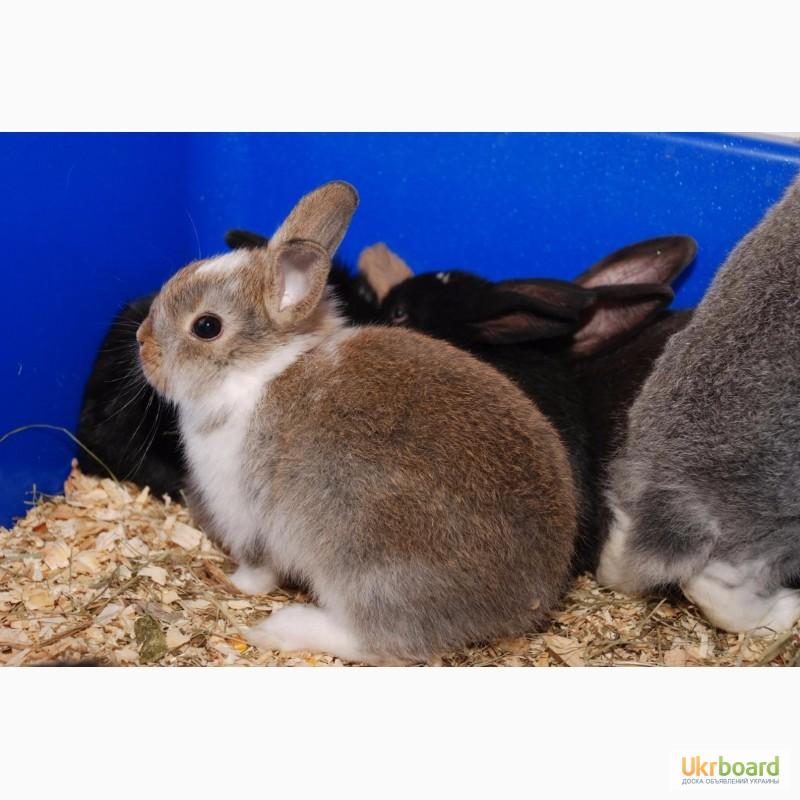 Фото 6. Распродажа крольчат, распродажа бельчат