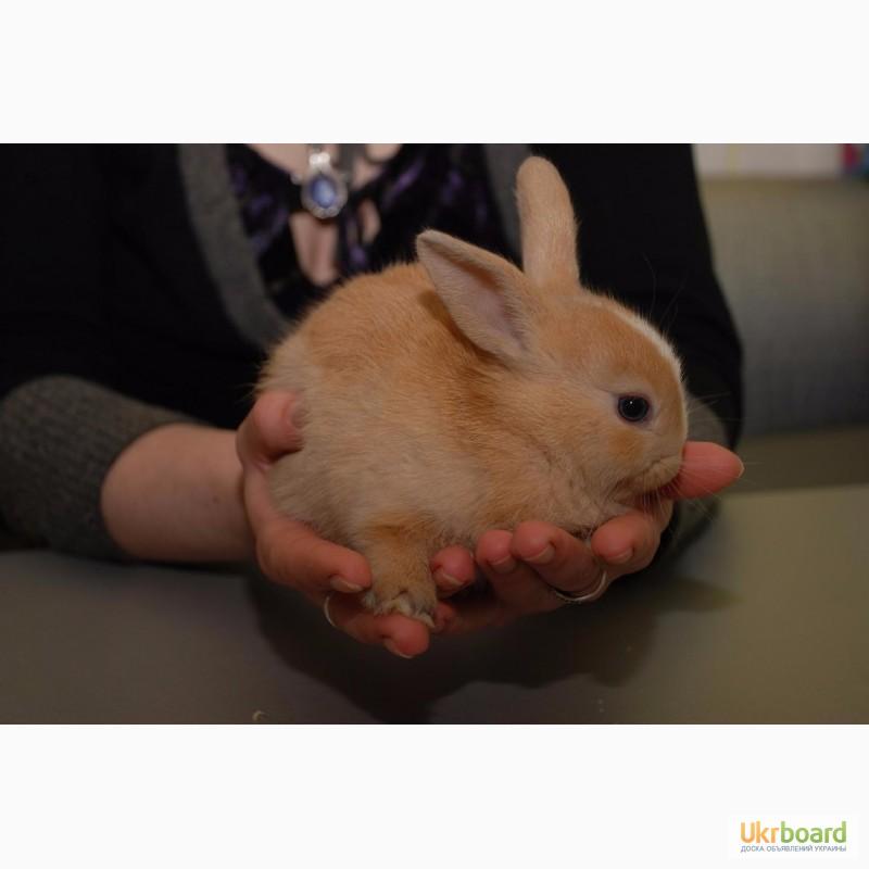 Фото 7. Распродажа крольчат, распродажа бельчат