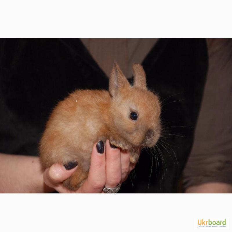 Фото 8. Распродажа крольчат, распродажа бельчат