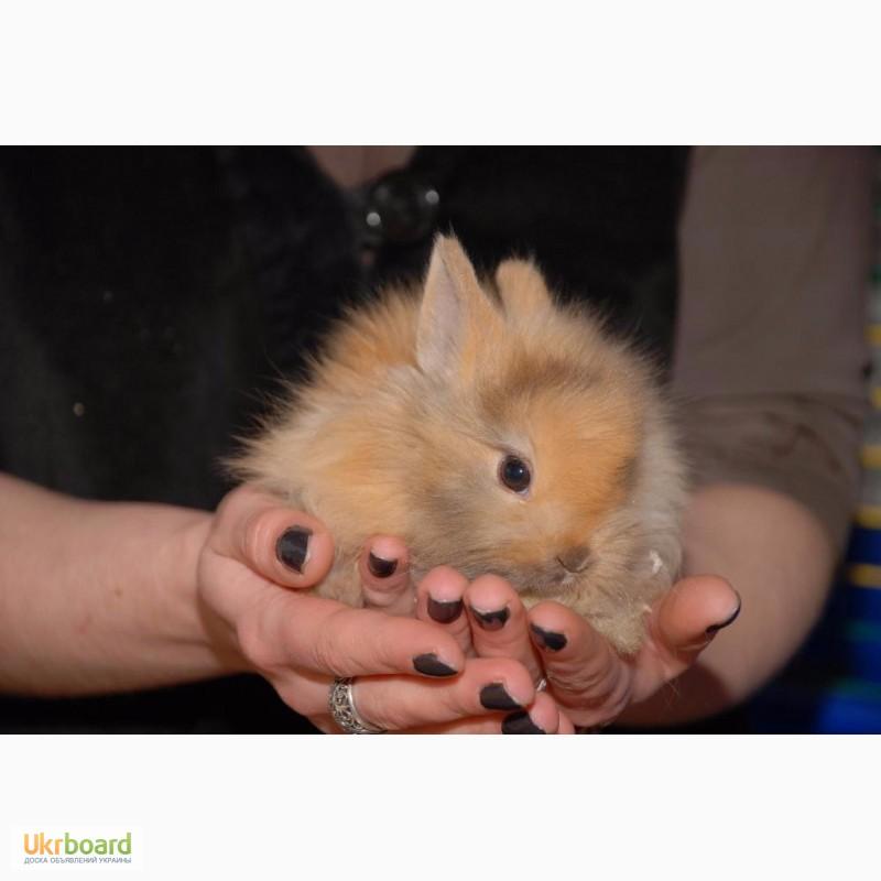 Фото 9. Распродажа крольчат, распродажа бельчат