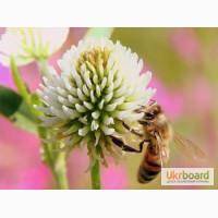 Продам бджолопакети 4 рр. кінець квітня
