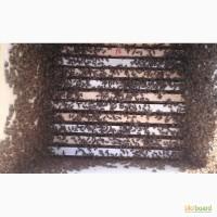 Продам бджолосім'ї карпати рамки дадана, рута, українська. Доставка