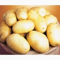 Куплю картофель в срочном порядке очень много
