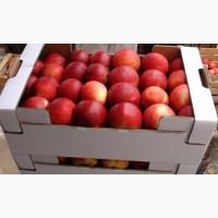Продам яблоки доставка по всей Украине