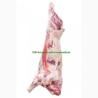 Півтуші яловичі / полутуши говяжьи 1 кат