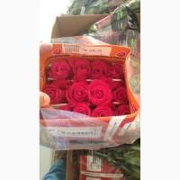 Предлагаем Эквадорскую розу Mondial Оптом напямую от производителя от 1 Коробки