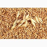 Куплю пшеницу 2-6 кл
