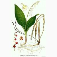 Продам луковицы Ландышей. Цена 3 грн и много других растений (опт от 1000 грн)