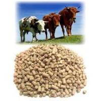 Корма для откорма бычков