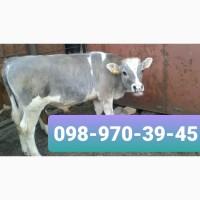 Заготівля врх ( бики 45 49 грн.)