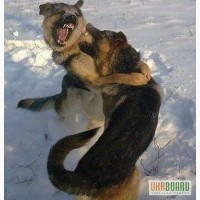 Дрессировка собак Кинологический клуб Украины Кинолог Кимев Сервис
