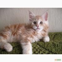Котята Мей-кун мальчики и девочки