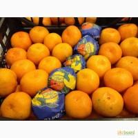 Продам мандарины первого сорта, г. Киев