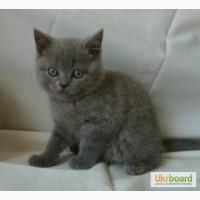 Роскошный голубой плюшевый мишка Теddy Bear 2 мес (родился 7 марта), в Киеве, крупный, пр