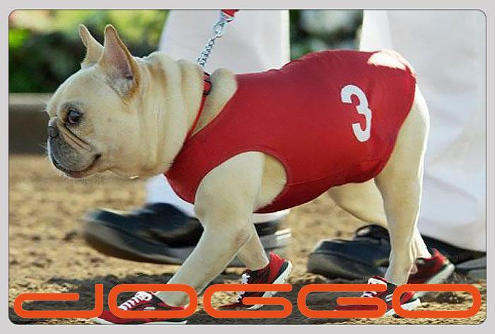 Фото 17. Одежда для собак французский бульдог и крупных пород - ТМ DOGGO