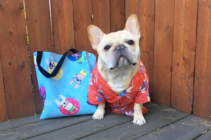 Фото 18. Одежда для собак французский бульдог и крупных пород - ТМ DOGGO