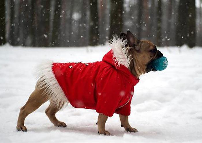 Фото 19. Одежда для собак французский бульдог и крупных пород - ТМ DOGGO